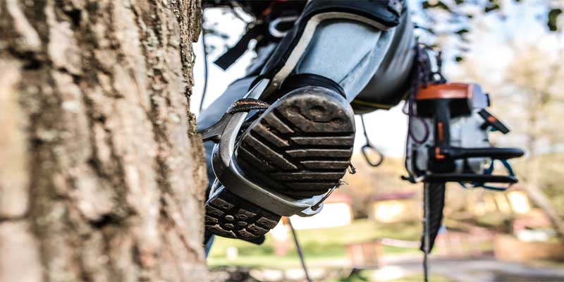 best tree climbing spikes