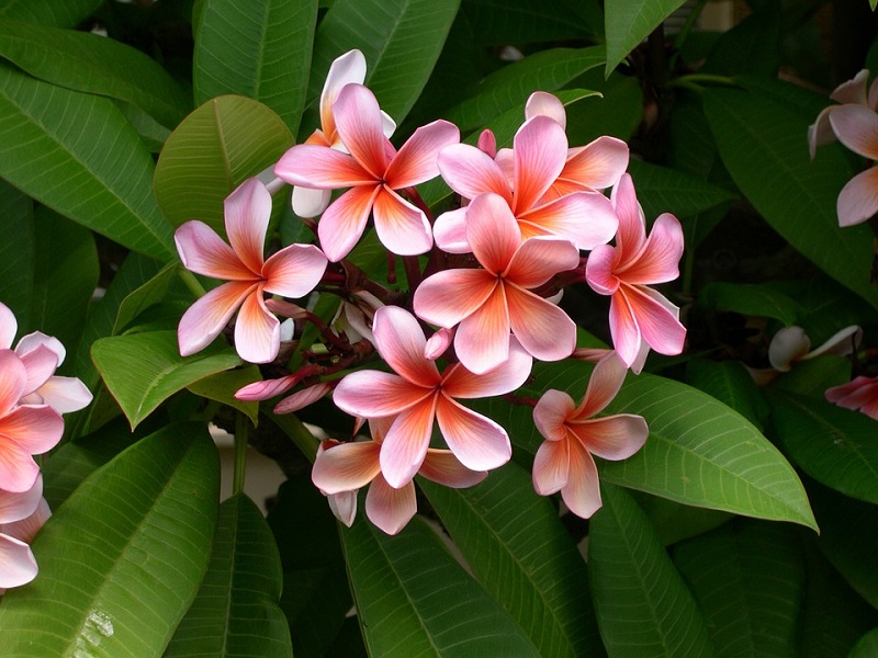 Tropical Backyard Decoration, Add Color to Your Landscaping