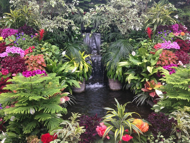 Tropical Backyard Decoration, Build a Small Pond or Fountain