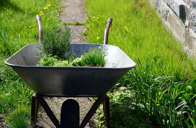 How Easy it is to Grow a Herb Garden in My Backyard