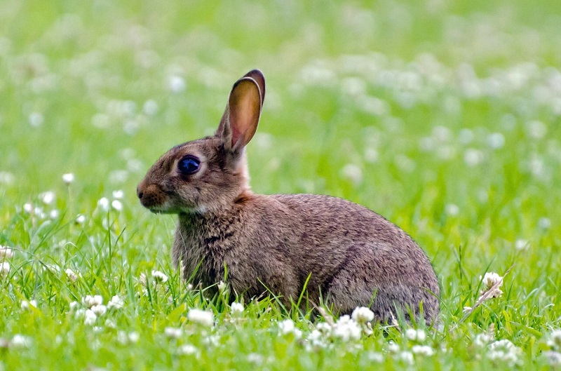 How to Keep Rabbits Out of Your Garden