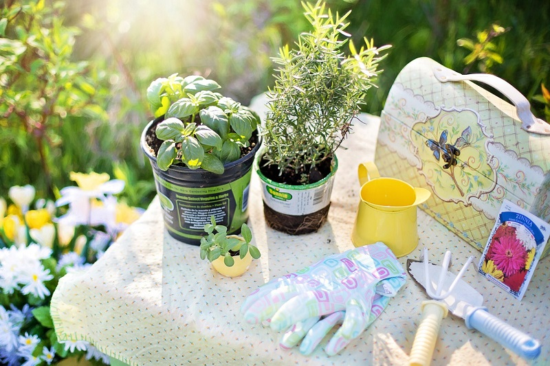 Steps on How to Grow a Herb Garden