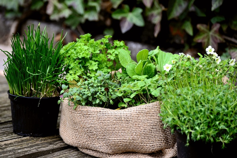 What herbs do you want to plant and how many