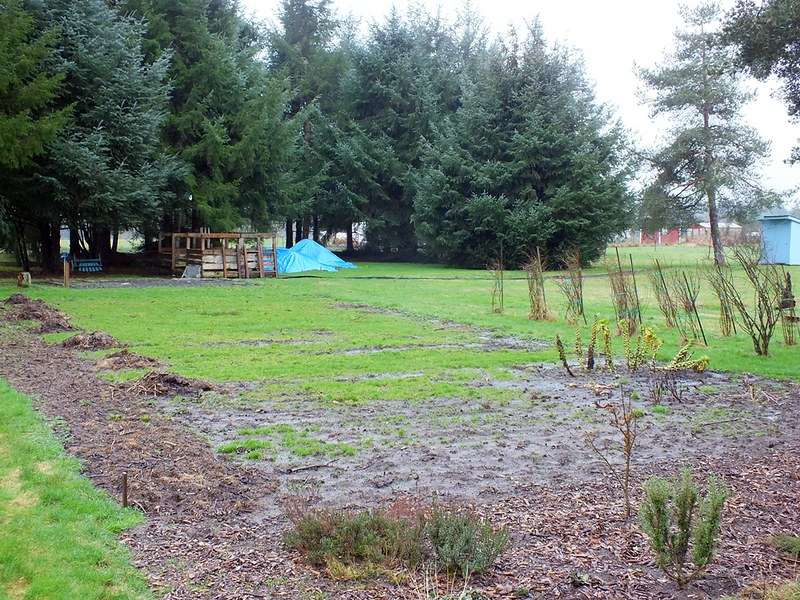 How to cover up mud in your backyard