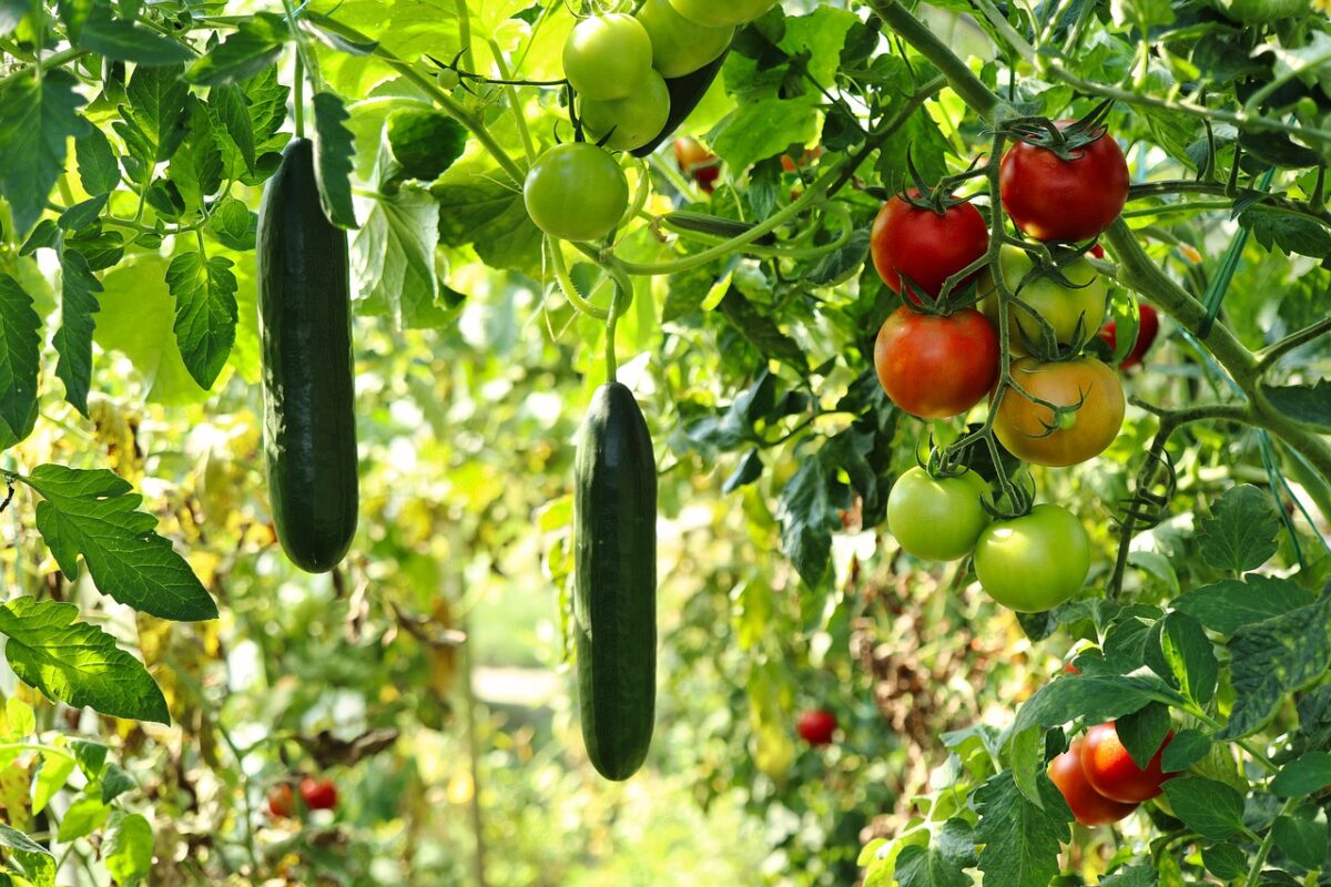 Requirements to grow an emergency garden