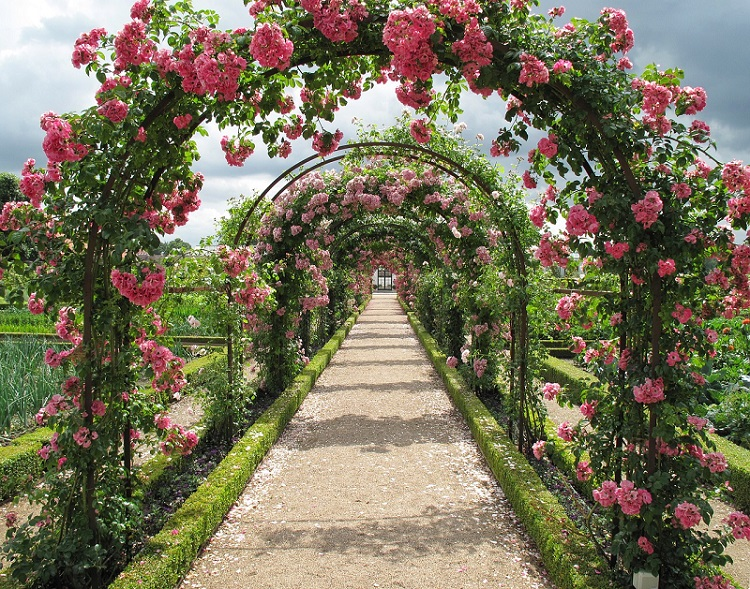 A pathway with arched rose