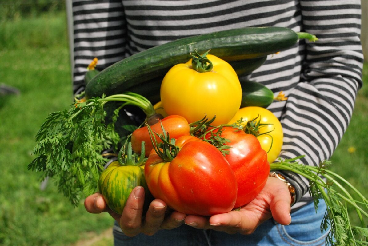 Growing vegetables for an emergency garden